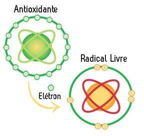 radicais livres antioxidante