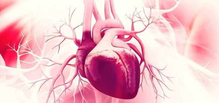 Hipertrofia do coração – O coração pode crescer?